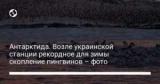 Антарктида. Возле украинской станции рекордное для зимы скопление пингвинов – фото