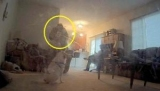 Камере наблюдения удалось запечатлеть древний призрак женщины, посещающий дом пожилой пары